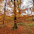 Autumn Leaves Common Wood  by Gary Eason