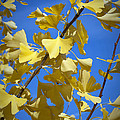 Autumn Leaves by Design Windmill