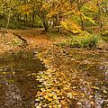 Autumn Leaves In Burn Vertical by David Head