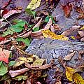 Autumn Leaves In Creek Bed by Karen Adams