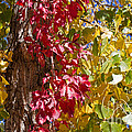 Autumn Leaves In Palo Duro Canyon 110213.97 by Ashley M Conger
