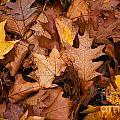 Autumn Leaves by Matt Malloy