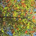 Autumn Leaves by Melissa Darnell Glowacki