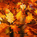 Autumn Leaves Oil by Steve Harrington