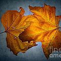 Autumn Leaves On Blue by Ann Garrett