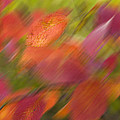 Autumn Leaves On The Abstract Background by   larisa Fedotova