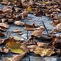Autumn Leaves by Orazio Puccio