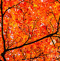 Glorious Autumn Leaves by Silken Photography