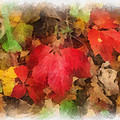 Autumn Leaves Photo Art 04 by Thomas Woolworth