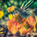 Autumn Leaves by Ray Warren