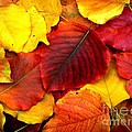 Autumn Leaves by Sharon Woerner