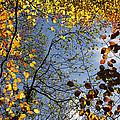 Autumn Leaves by Steve Ball