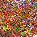 Autumn Leaves Through Filtered Sunlight II by L Brown