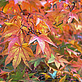 Autumn Leaves by Tony Murtagh