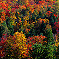 Autumn Leaves Vermont Usa by Panoramic Images