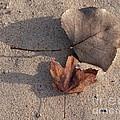 Autumn Leftovers  by Ann Horn