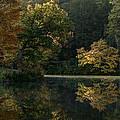 Autumn Light by Carol Montoya
