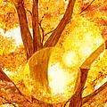 Autumn Light by Hailey E Herrera