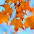 Autumn Light by Heidi Smith