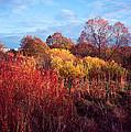 Autumn Light by Romeo Koitmae