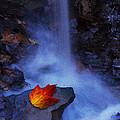 Autumn Light by Ron Jones