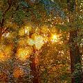 Autumn Light Symphony by Alain De Maximy