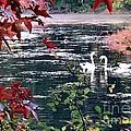 Autumn Love by Janice Drew