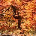 Autumn Maple by Bobbie Climer