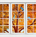 Autumn Maple Tree View Through A White Picture Window Frame by James BO Insogna