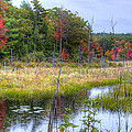 Autumn Marsh by Donna Doherty