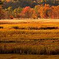 Autumn Marsh by Raymond Salani III