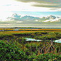 Autumn Marsh - Sullivans Island by Paulette B Wright