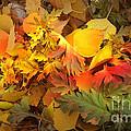 Autumn Masquerade by Martin Howard