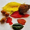 Autumn Medley by Jeff Kolker