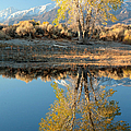 Autumn Mirrored by Frank Townsley