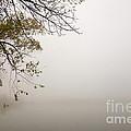 Autumn Mist by Jacqueline Athmann