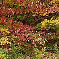 Autumn Mix by Gene Cyr