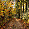 Autumn Mood In The Forrest by Mike Santis