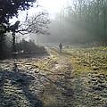 Autumn Morning  by David Stribbling