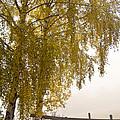 Autumn Morning by Heiko Koehrer-Wagner