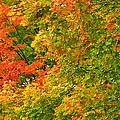Autumn Mosaic Nj by Regina Geoghan