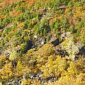 Autumn Mountain Side by Gene Cyr