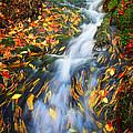 Autumn Mountain Stream by Carolyn Derstine