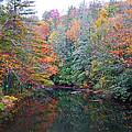Autumn Mountain Stream by Patricia Taylor