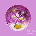 Autumn Mum Orb Abstract by Darleen Stry