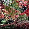 Autumn by Nataliya Pergaeva