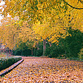 Autumn - New York City - Fort Tryon Park by Vivienne Gucwa