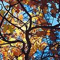 Autumn Oak by Brady Lane