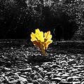 Autumn Oak Isolations by Terri Waters