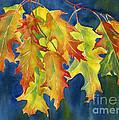 Autumn Oak Leaves  On Dark Blue Background by Sharon Freeman